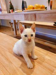 Katzenbabys kleines Kätzchen kitten
