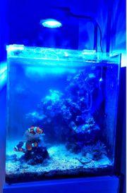 Aquarium Cube meerwasser riffaquarium lebendgestein