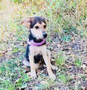 Hund Leika - aus Tierschutz-