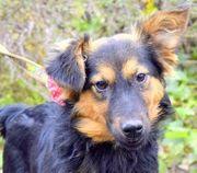TARA R5 - kinderliebes intelligentes Hundemädchen