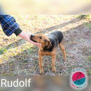 Rudolf- kleiner Mann wurde bis