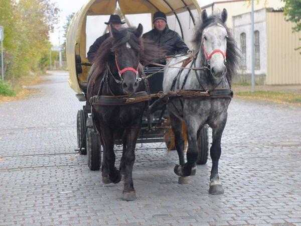 Gespann Arbeitspferde