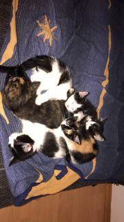 5 Katzenbabys suchen neues Zuhause