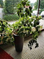 Hochwertiges Tongefaess mit Pflanze