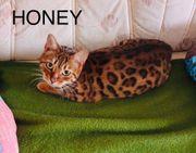 Erfahrener Fellfreund für Honey gesucht
