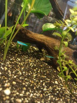 Fische, Aquaristik - Aquarium mit Zubehör und Ersatzfilter