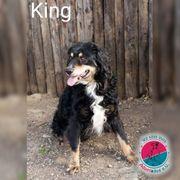 King- sucht sein Königreich