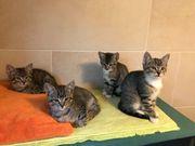 4 Katzenkinder suchen ein Zuhause