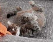 Mobile Katzen- und Kleintierbetreuung 70563