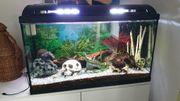Aquarium 126 Liter