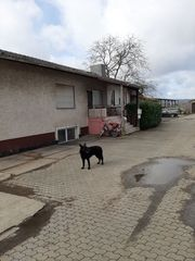 Reiterhof Aussiedlerhof oder Kapitalanlage