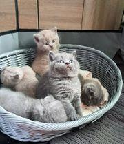 - Kitten