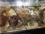 Meerwassergestein