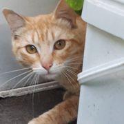 Katzenjunge Bodhi sucht sein Körbchen