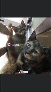 Vilma und Chapa ESCG - bald