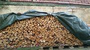 Brennholz Buche - 5 Schichtmeter