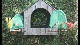 Vögel - Große Vogelfalle Bird Trap Stieglitz