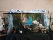 60er Aquarium