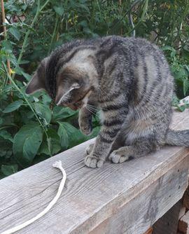 Junges Kätzchen: Kleinanzeigen aus Schwedelbach - Rubrik Katzen