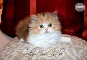 BLH Katzen und Katerchen suchen