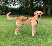 Junghund Bruno sucht seine Familie