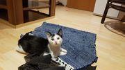 Zwei Katzenkinder suchen ein Zuhause