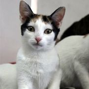 Verschmustes Katzenmädchen Janina möchte gern