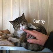 BENNY sucht ein Zuhause mit