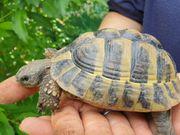 Fundschildkröte sucht Zuhause