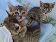 3 Süße Kitten
