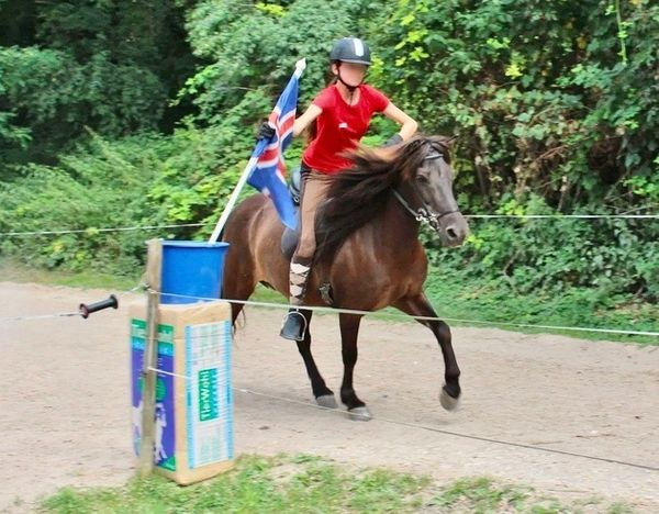 Kleine Islandstute Rappe Kinder Pony