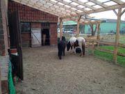 Offenstall Pferdebox mit Paddock Sommerweide
