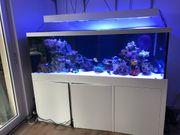 Aquarium 1200l Weißglas Neuwertig Garantie