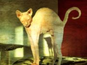 Tierfreundliche Putzhilfe nach Karlsdorf-Neuthard gesucht