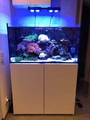 Meerwasser Aquarium 300 Liter