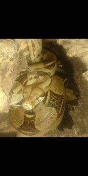 Reptilien Angabe Liste
