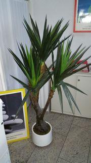 DEKO Palme ca 3m hoch