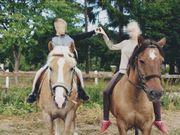 vermisste Pferde