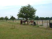Paddock-Pferdebox zu vermieten