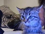 Eine sehr schöne katze