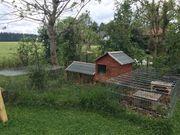 Kaninchenstall mit Freigehegen