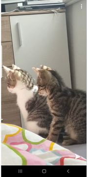 Zwei kleine kater