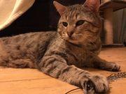 Katzenbrüder Remus und Pufi suchen