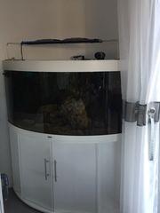 Meerwasser Aquariumauflösung Juwel Trigon 350