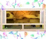 Terrarium Holz NEU