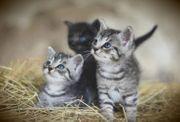 Ich suche 2 Katzenkitten