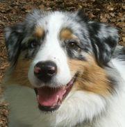 Hundebetreuung vom zertifizierten Hundefachmann ab