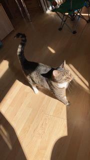 Katze sucht neuen Wirkungskreis - Notfall