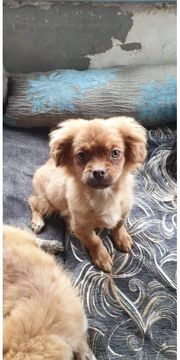 Ginger 4 Monate