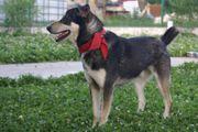 Fröhlicher lieber Hundebub Boris wünscht